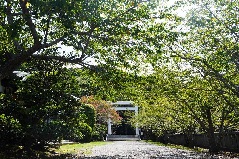 千葉で縁結び&金運UPの神社に行ったべ!(安房神社)