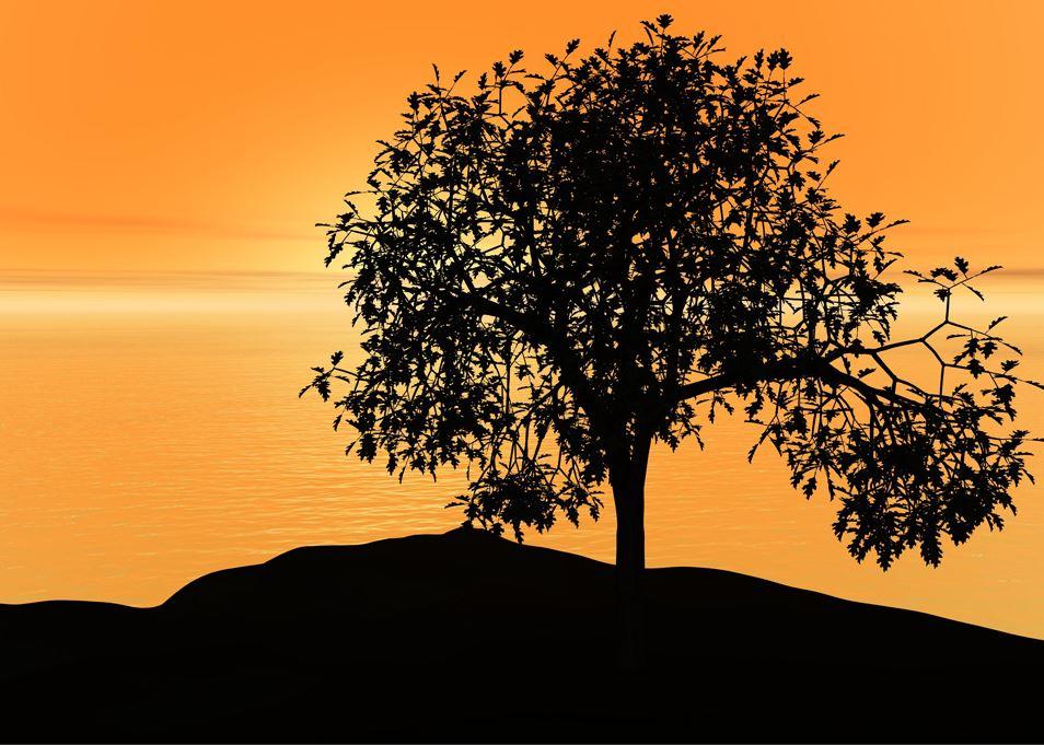 「カバラ・生命の木」の秘密に触れてみない?